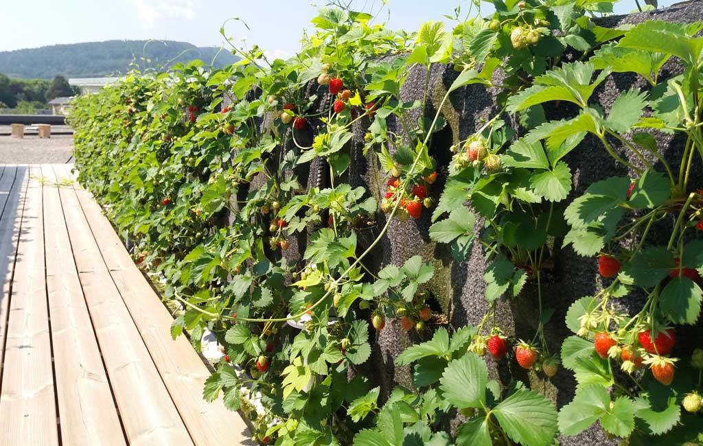 potager urbain vertical annecy les jardins du Parmelan